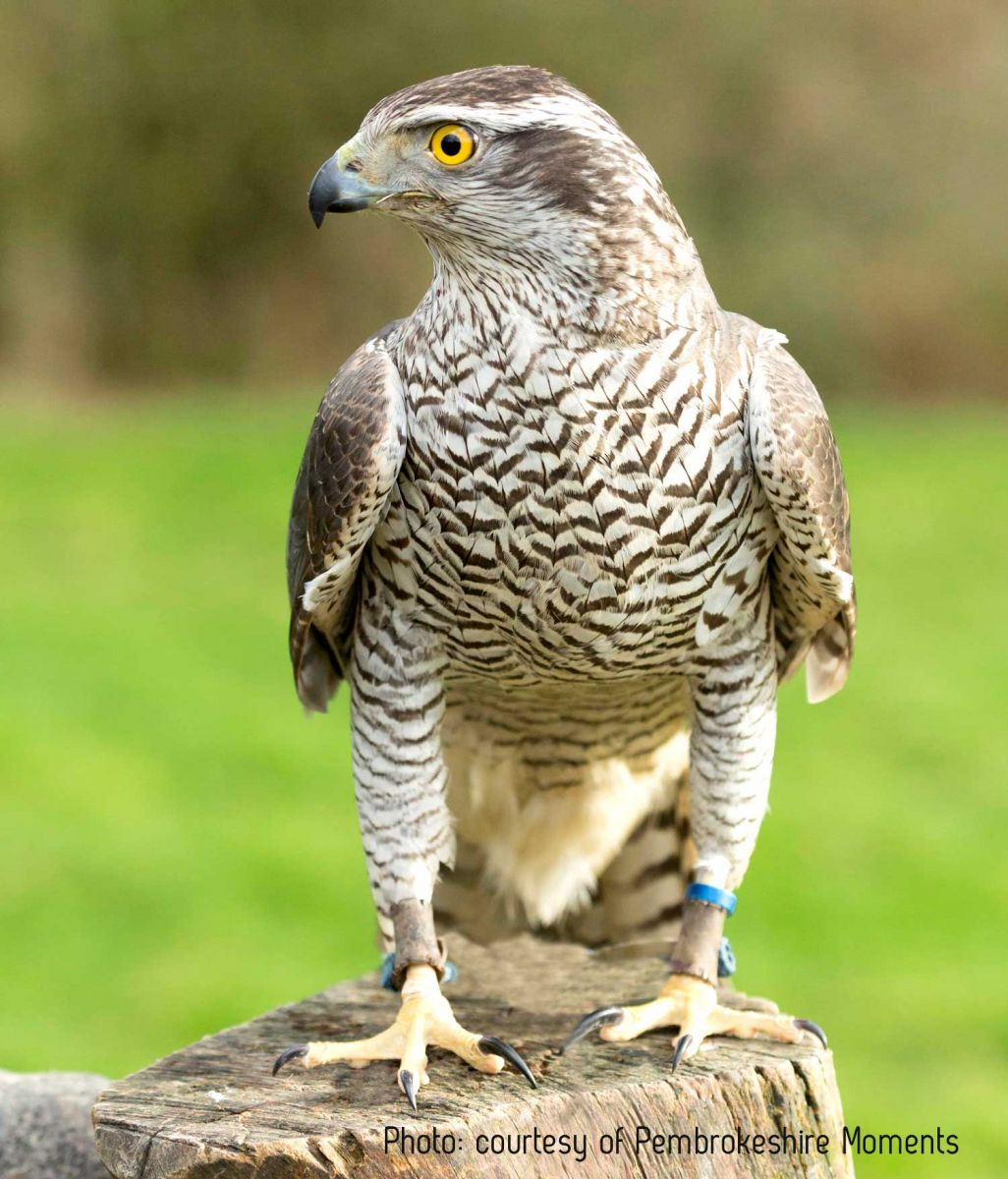 The British Bird Of Prey Centre Carmarthenshire